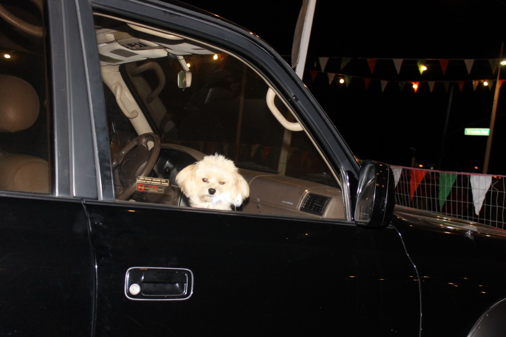 leaving the dog in the car
