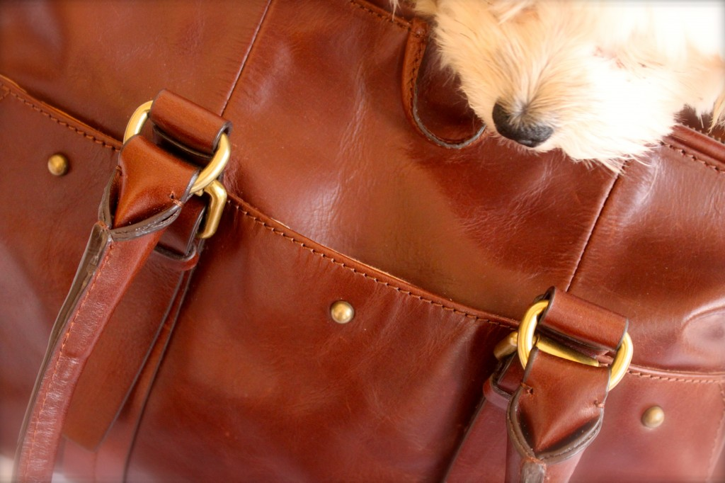 holding horses bag