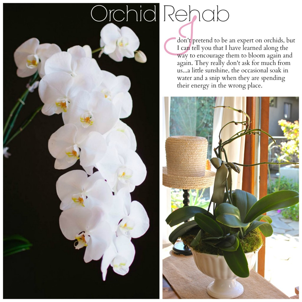 orchid rehab