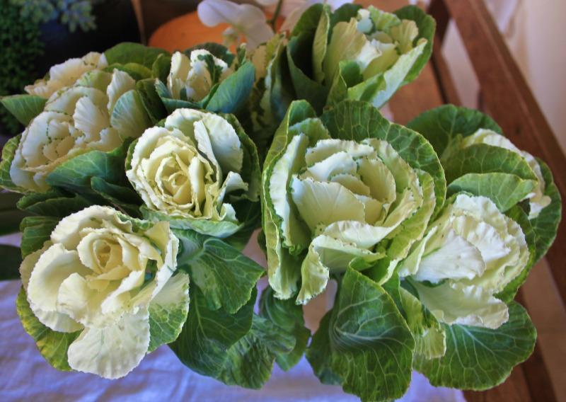 kale for fresh front door arrangment