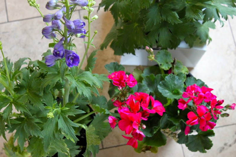 Potted plants make for a quick DIY door welcome. Fresh and super easy!